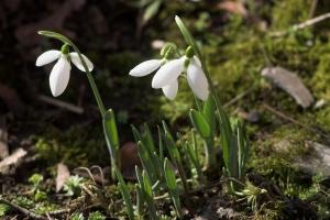 Spring flowers file5601267028648