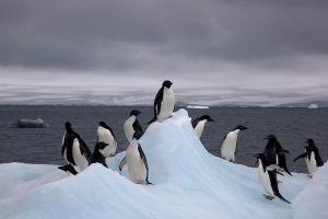 1024px-Adelie_Penguins_on_iceberg