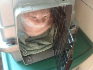 "Simba back safe in her carrier, her normal ""safe place""."
