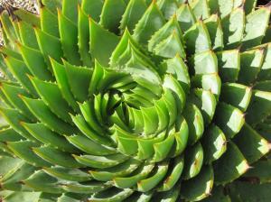 Succulent4-7-2010
