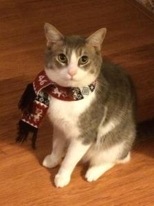 Cat wearing winter scarf