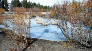 Frozen pond in marsh