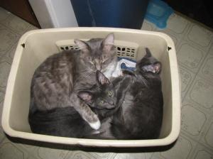 kittens in laundry basket