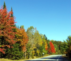 fall color trees along a road