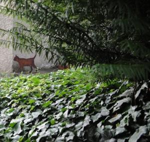 Cat in Schroedinger's garden
