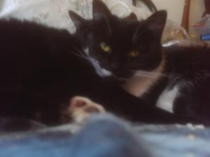 Two black and white cats snuggling