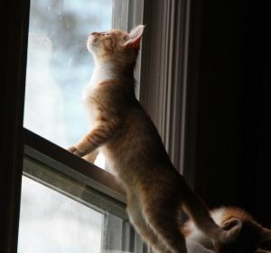 Kitten standing in window looking up