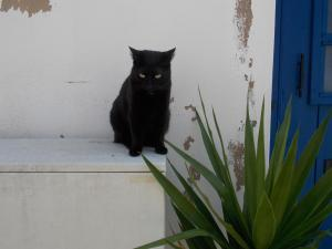 Small black cat on whitewashed step next to aloe plant