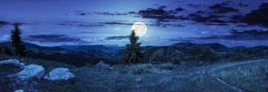 Full moon behind pine tree in panoramic landscape