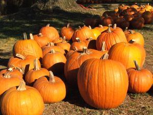 Pile of pumpkins in setting sunlight
