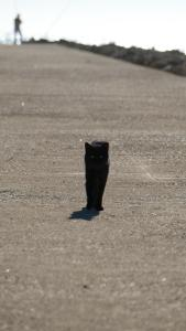 Black cat approaching on grey pavement
