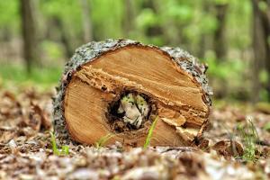 Horizontal log slice showing hollow core