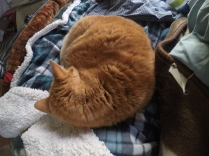 Orage Simba curled up on her blanket