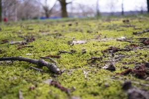 Spring ground just turning green