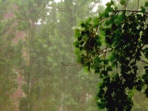 Rain coming downaround green tree, causing mist