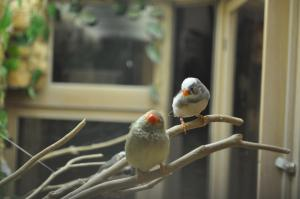 Two small birds on branches