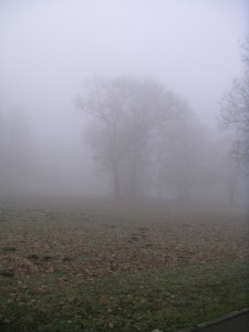 Tree just visible in thick fog