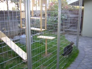 Metal screened utdoor catio and cat