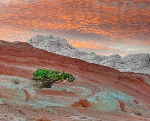 Sunset in Painted Desertsmall tree in foregroud
