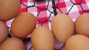 Closeup of three eggs in wire basket