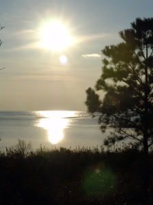 White sun with white reflection on sea with dark land and tree in foreground