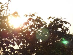 Sun through bushes with reflectedglare