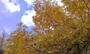 Tress with gold, yellow and orange leaves against sky