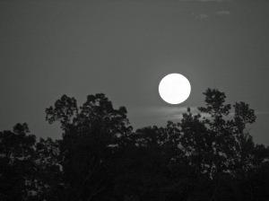 Full moon over dark treetops