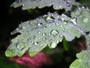 Large dewdrops om leaf