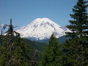 View of snow cap on Mt. Rainier over trees