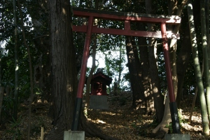 torii in shade of trees