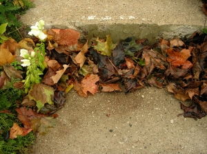 dried leaves against step