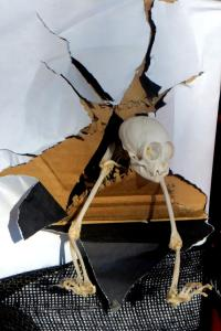 Skeleton parts & skull coming out of smashed wall